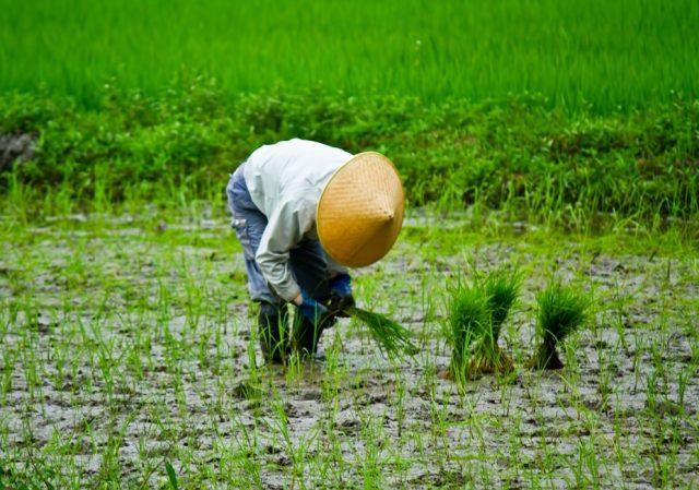 米の値段が上がって大暴れ!江戸時代「米」にまつわる5つの事件
